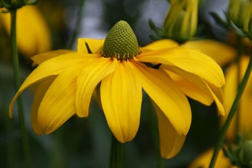Sommer Blüte